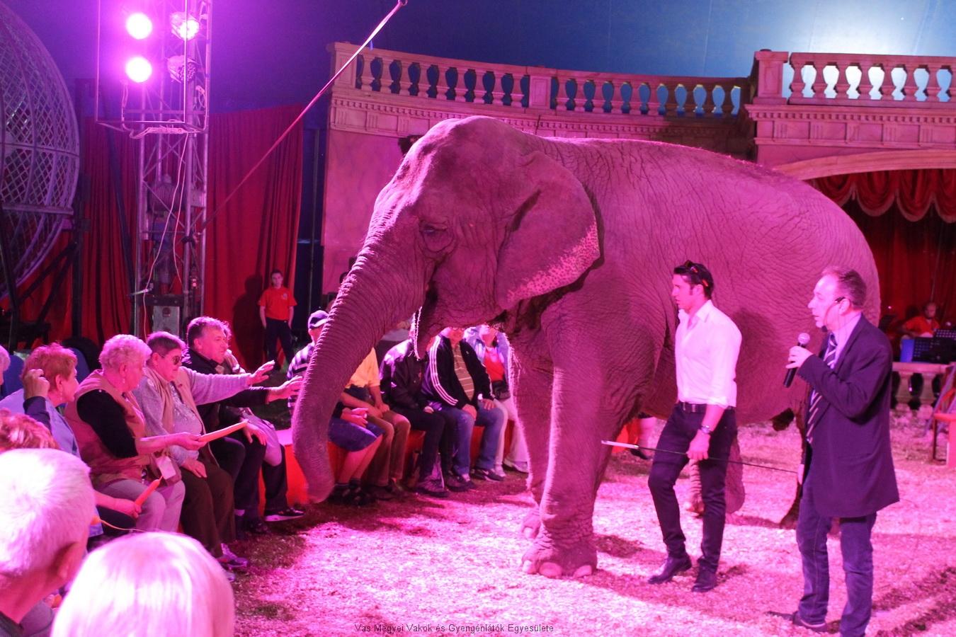 Az elefánt mindenkitől elfogadta, sőt elvette, ha valaki nem nyújtotta neki a sárgarépát. Cserébe engedte, hogy simogassák.