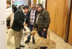 Amikor három kutyás találkozik: Bősze György, Varga Olivér és Kocsis Tamás. Természetesen a kutyák is barátkoznak egymással. Egyesületünkben jelenleg 5 vakvezető kutya végzi nap mint nap a feladatát.