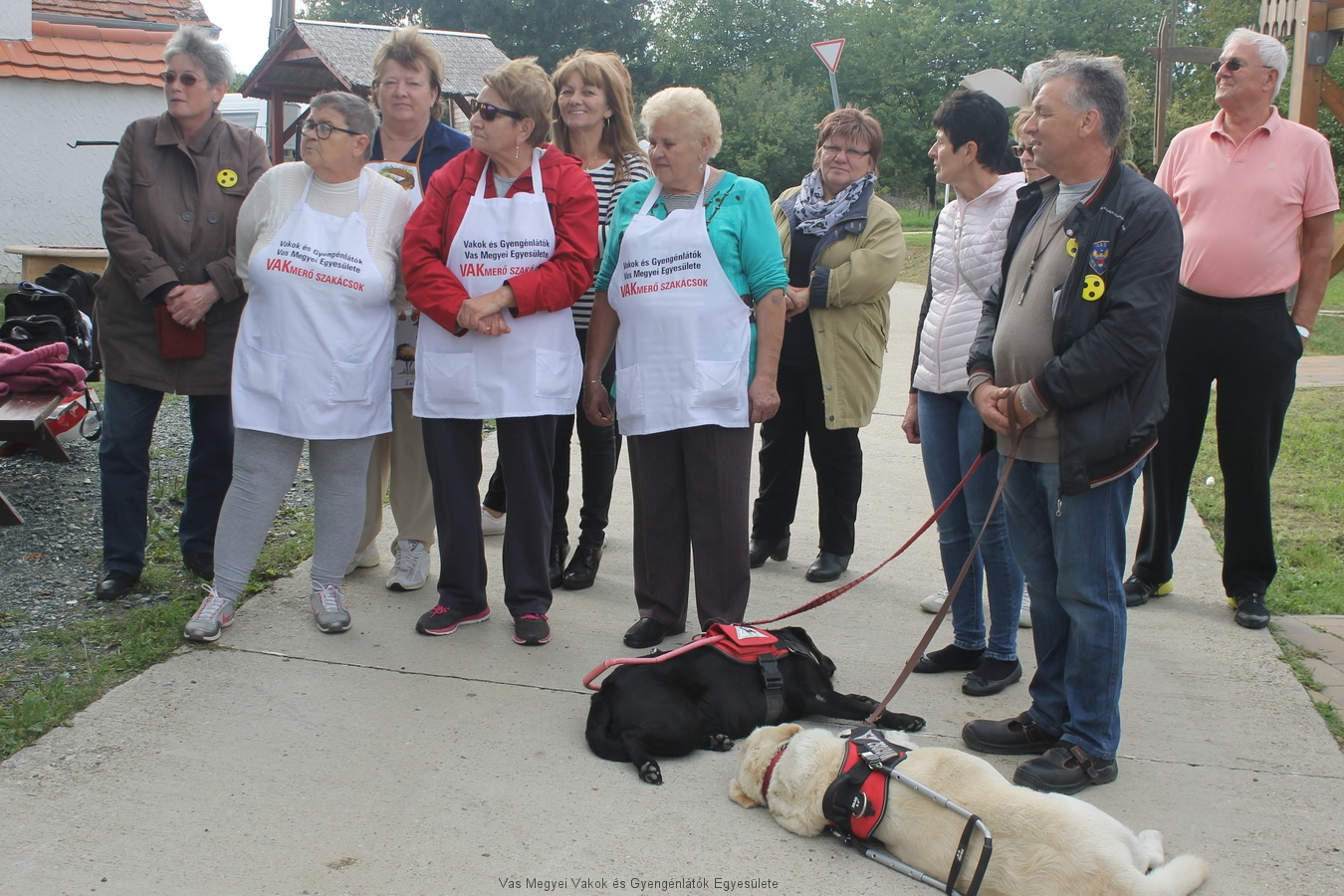 Berci és Léna, a két vakvezető kutya, nagy érdeklődést keltett a szakemberek körében.