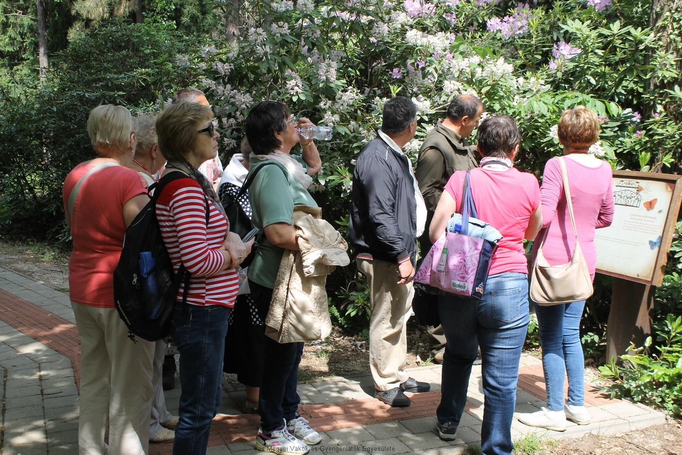 Az erdészet munkatársa végigvezette egyesületünk tagjait az akadálymentes úton, ahol beszélt a növényekről és meg is lehetett tapogatni azokat.